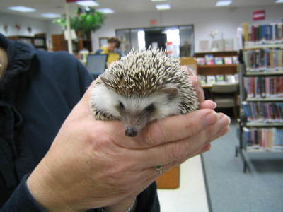 Hedgehog_002